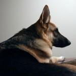 drug dog